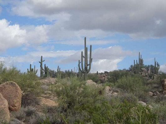 Scootsdale (AZ)