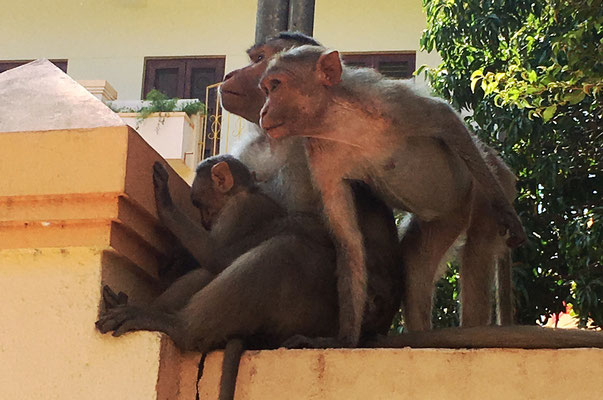 Lebhafte Familie am Straßenrand