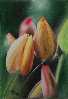 Tulpe, Öl-Pastellkreide, 14 x 20 cm, 2017