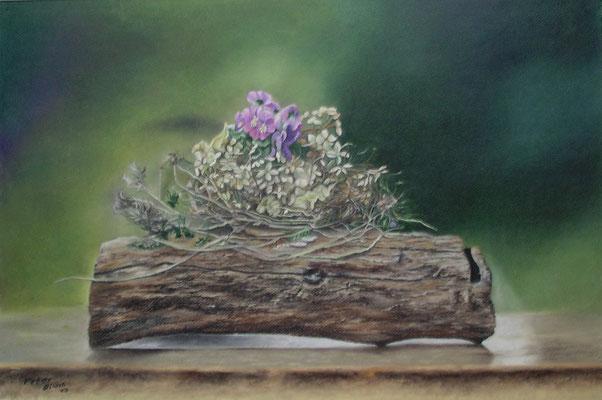 Stiefmütterchen auf Holz II, Öl-Pastellkreide, 35 x 55 cm, 2016