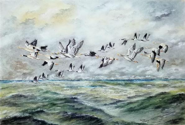 Wildgänse Sturmerprobt, Öl-Pastellkreide, 43 x 62 cm, 2021