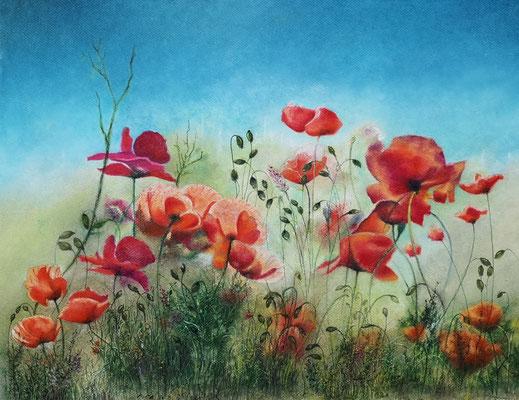 Klatschmohn, Öl-Pastellkreide, 43 x 56 cm, 2021