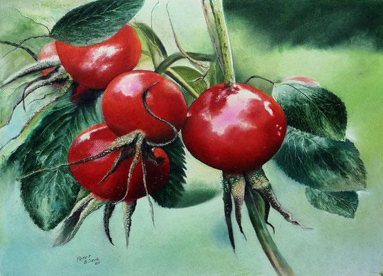 Hagebutten II, Öl-Pastellkreide, 40 x 56 cm, 2020
