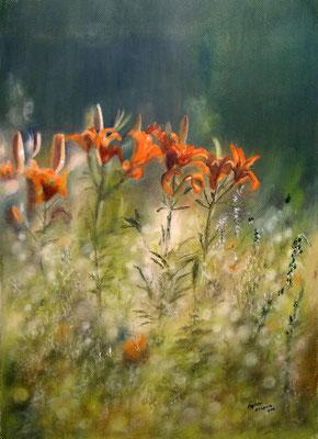 Ackerfeuerlilien, Öl-Pastellkreide, 37 x 52 cm, 2011