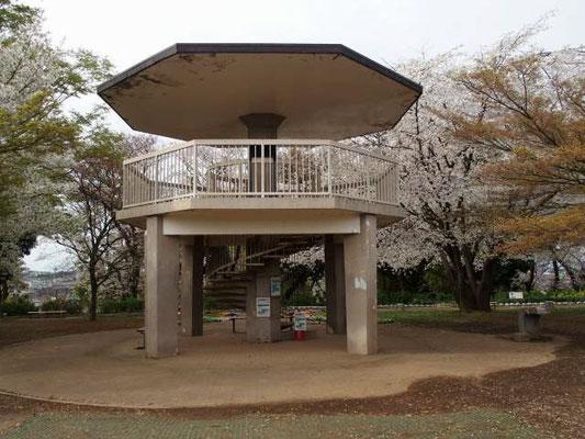 夢見ヶ崎動物公園 展望台 桜