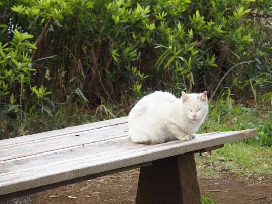 夢見ヶ崎動物公園 ネコ