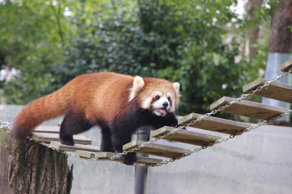 八木山動物公園