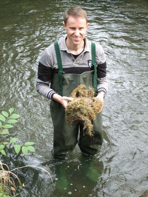 Brutnachweis! Wasseramselnest aus einem Nistkasten im Stadtwald