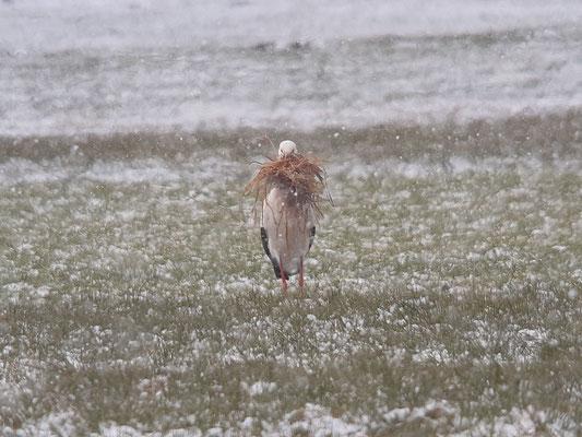 Storch in Diedorf