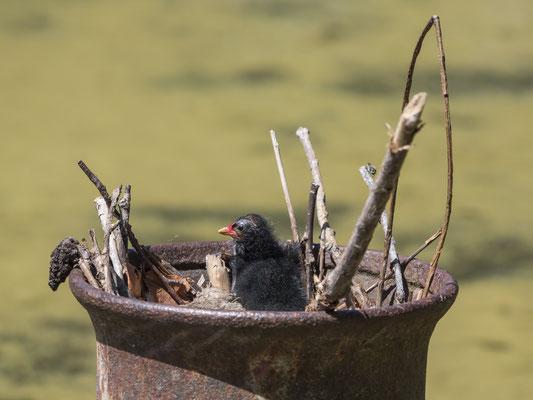 Ein besonderer Neststandort