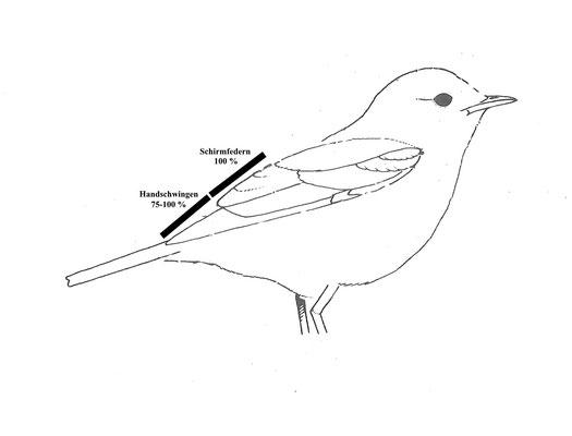 Schema Fitisflügel