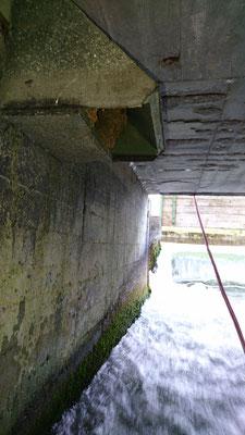 Wasseramselnistkasten mit Nest am Lochbach