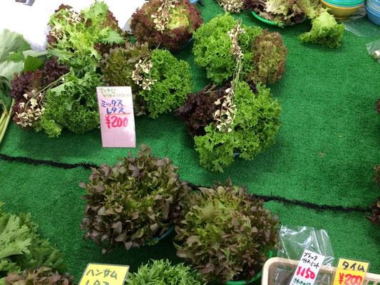 鎌倉市場小さいけど、サラダ素材がメイン!カラフルなレタスがとてもユニーク。