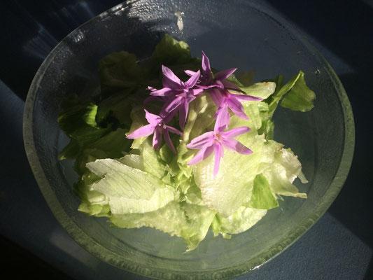 ニンニクその物の味と香りのソサェティーガーリックは私の好物!今の季節のエデイブルフラワー