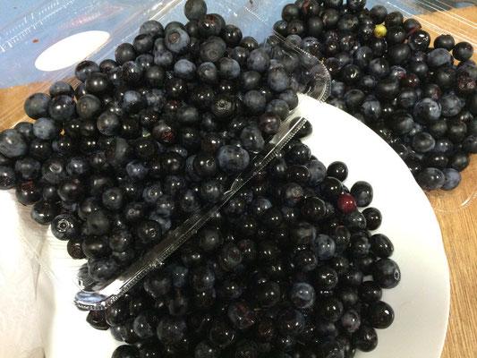 大収穫のブルーベリー、庭にもあるけど、こんなには獲れません。