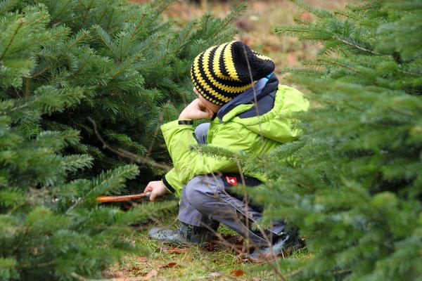 Weihnachtsbaum selber schlagen auf Hof Wentzien