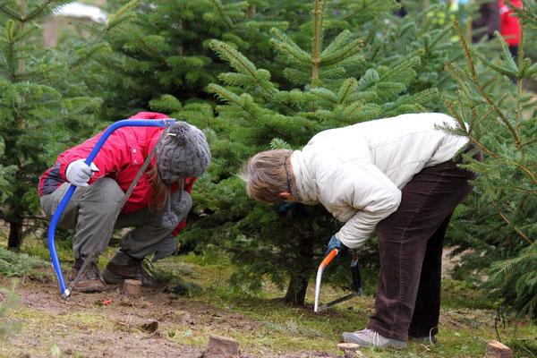 Weihnachtsbaumschlagen auf Hof Wentzien in Dohren