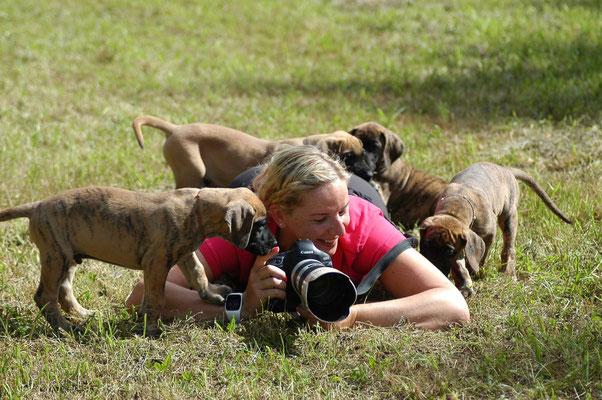 Kuscheldoggen Shooting - Foto Christiane Recht, Werdohl - August 2015