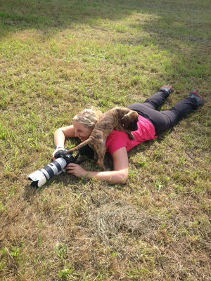 Kuscheldoggen Shooting - 15.08.2015 - Foto: Christiane Recht