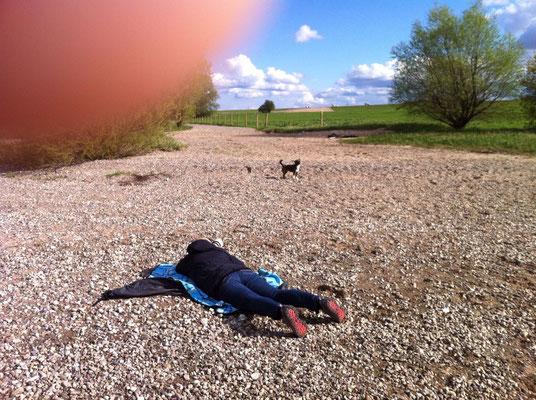 Hundeshooting - Kenzi - April 2016 - am Rhein in Ossenberg / Niederrhein : Foto Handyfoto: Stefan