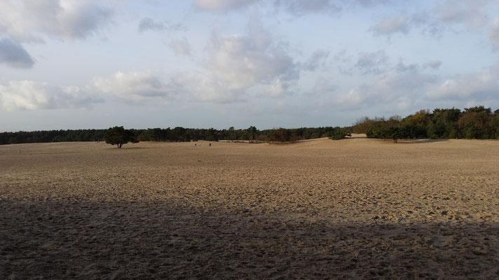 Welpenshooting in den Soester Duinen in den Niederlanden - Traumkulisse & Traumhunde - Foto: ich / Handy
