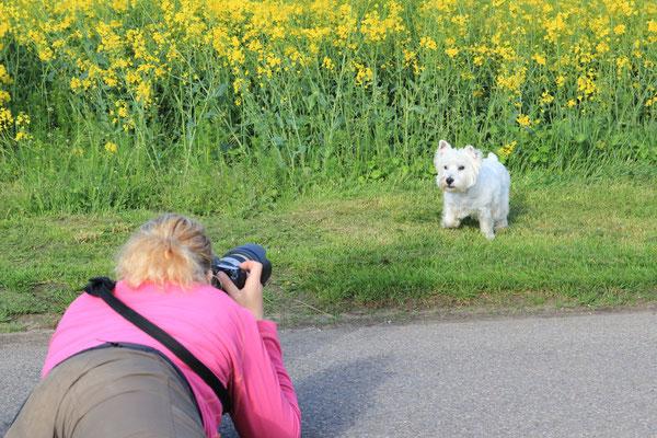 Hundeshooting - Sam und Buffy, Hamminkeln 2014 - Foto Marcel Mandel