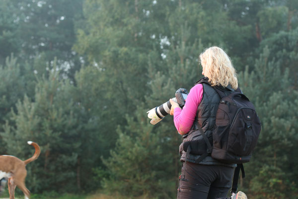 Hundeshooting Silbersee Haltern am See - September 2015  - Foto: Tierfotografie MECKY Nadolny