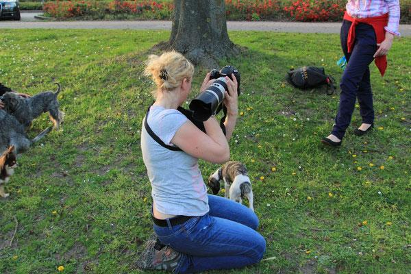 Hundeshooting - Burg Linn,  Krefeld 2013 - Foto Marcel Mandel