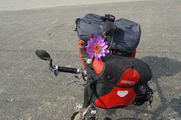 Passpartu mit Lotusblüte...