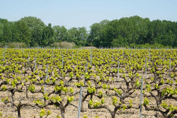 Ich durchradle das Navarra-Weingebiet...