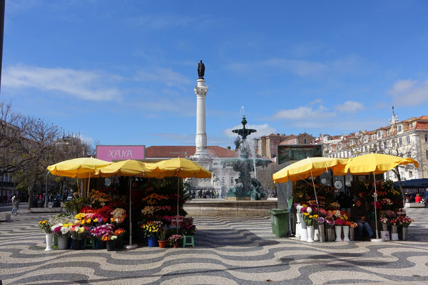 Blumen, Fontäne, Denkmal, Sonne, einfach ein schönes Sujet an der Praça Dom Pedro IV