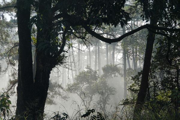 """Morgenstimmung - märchen-zauberhaft liegt der """"dschunglig"""" wirkende Wald im Morgennebel..."""