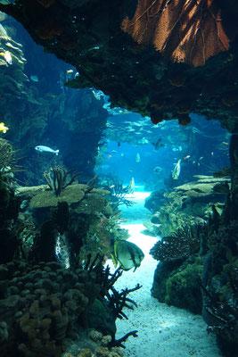 Das Eintrittstor zu Aquarium....