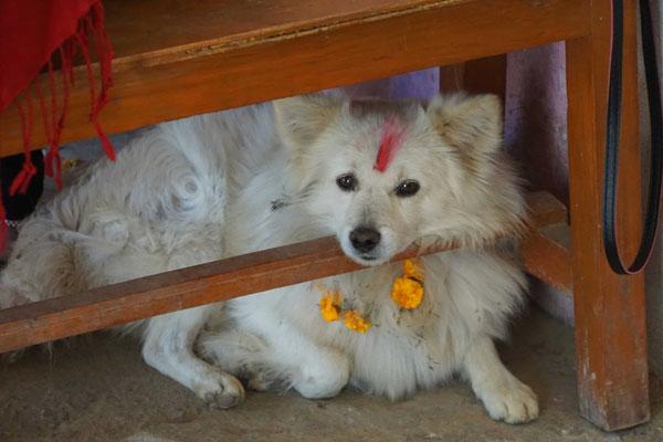 Der Hund wurde im Verlauf des Festivals gesegnet...