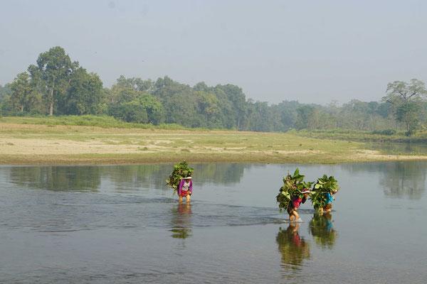 Sie tragen ihre schweren Lasten ganz selbstverständlich auch durch den Fluss...