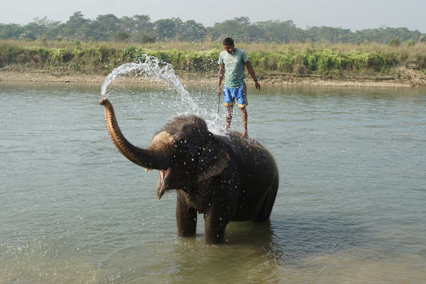 Elefantenbad...