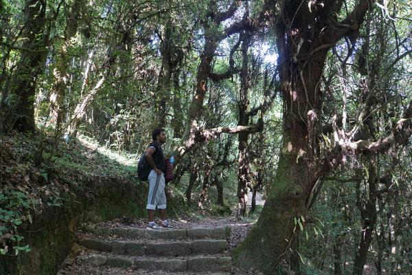 Treppen führen durch den Dschungel...