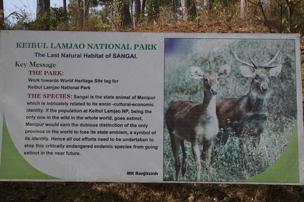 Sangai - die Nationaltiere Manipurs - wollten wir sehen...