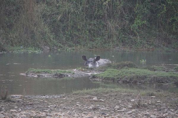 Ein Nashorn beim Bade beobachtet - in freier Wildbahn - das war echt schön und eindrücklich - was ich nicht alles sehe - bin wirklich vom Glück begleitet...! DANKE!!