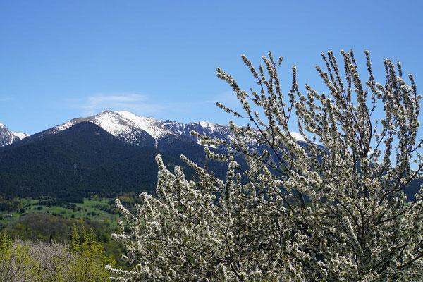 Blühende Bäume - schneebedeckte Berge - einfach nur schön...