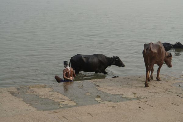 Mensch und Tier sind am heiligen Fluss sehr nah...