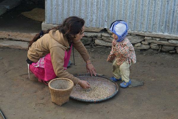 """Sulav """"hilft"""" Shiwani beim Sotieren getrockneter Bohnen..."""