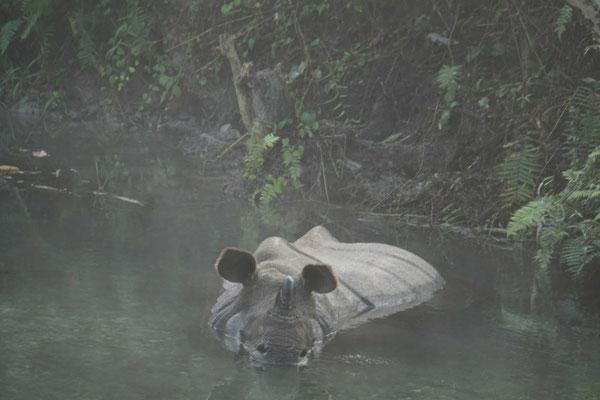 Das Rhino beim Bade im Nationalpark...