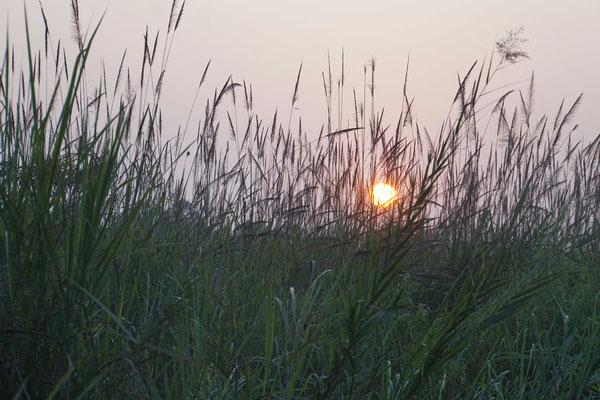 Die Sonne geht unter im Dschungel...