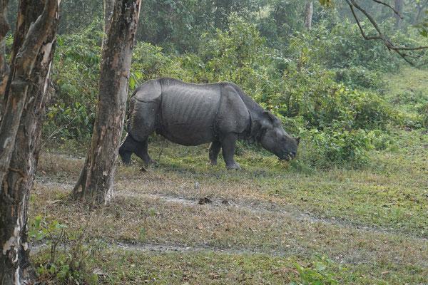 Ein anderes Rhino beim Frühstück...