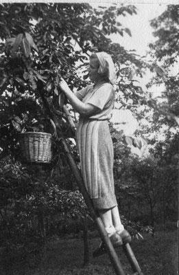 Susi als junge Frau beim Kirschenpflücken auf dem elterlichen Grundstück