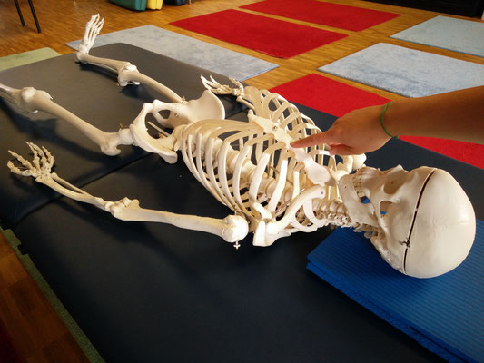 NeuroScanBalance - Skelett