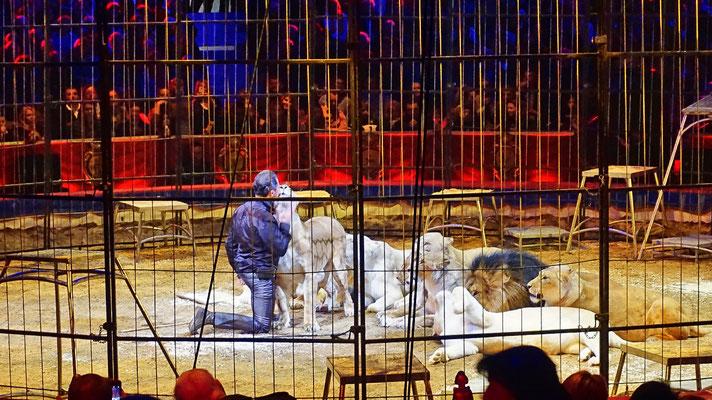 Martin Lacey junior mit der grössten Raubtiergruppe der Welt (Löwen und Tiger)