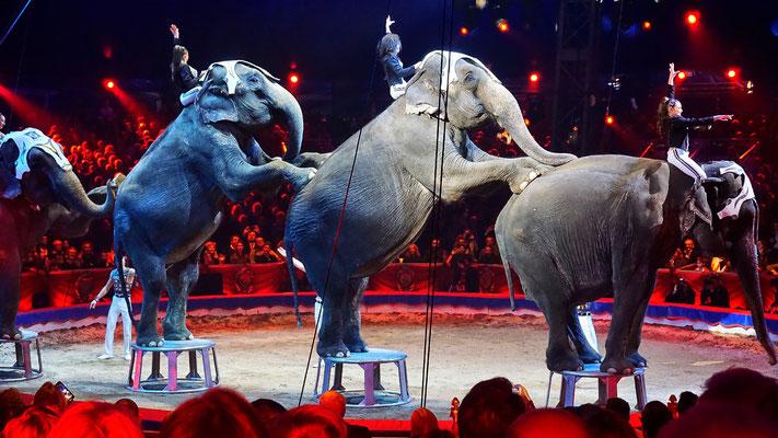 Die Elefantengruppe von Familie Joy Gärtner