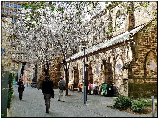 Frühling in Adelaide.